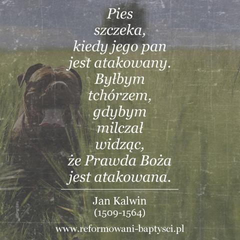 """Reformowani Baptyści Zielona Góra: """"Pies szczeka, kiedy jego pan jest atakowany. Byłbym tchórzem, gdybym milczał widząc, że Prawda Boża jest atakowana"""" – Jan Kalwin (1509-1564)."""